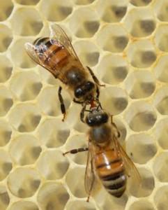 abejas_concepto_abstracto