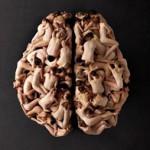 La neurociencia en el aprendizaje multisensorial