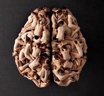 cerebromultis