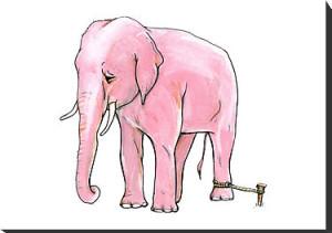 elefante-sumiso (1)